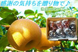 果実のギフト(梨・ぶどう)