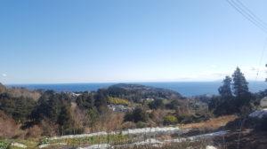 当園のミカン山から見える真鶴半島