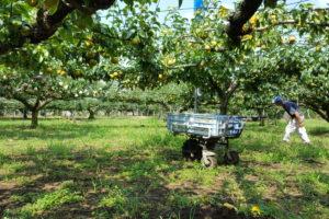 梨園②2018年 幸水の収穫時